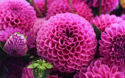 Embellece y Sana tu Casa con Plantas y Flores